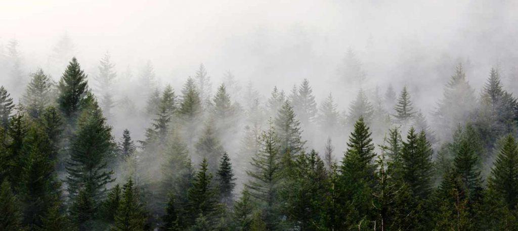 استخراج پایدار از معادن چوب کاج اسکاندیناوی برای ترمووود